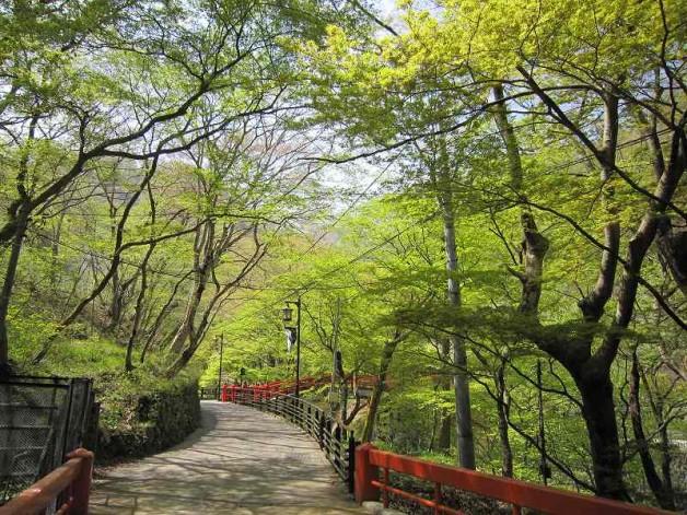 湯元 河鹿橋(春)