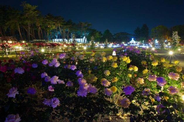 敷島公園バラ園(4)(前橋市)